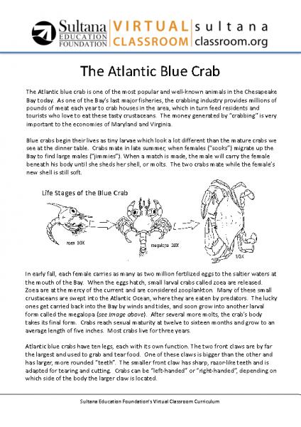 Blue Crab Text