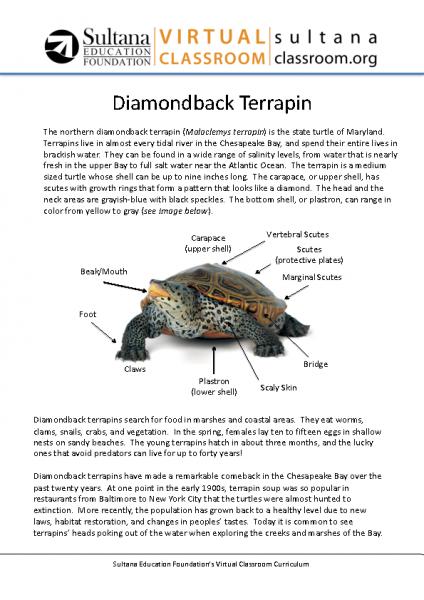 Diamondback Terrapin Text