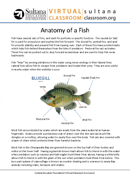 Fish Anatomy Text