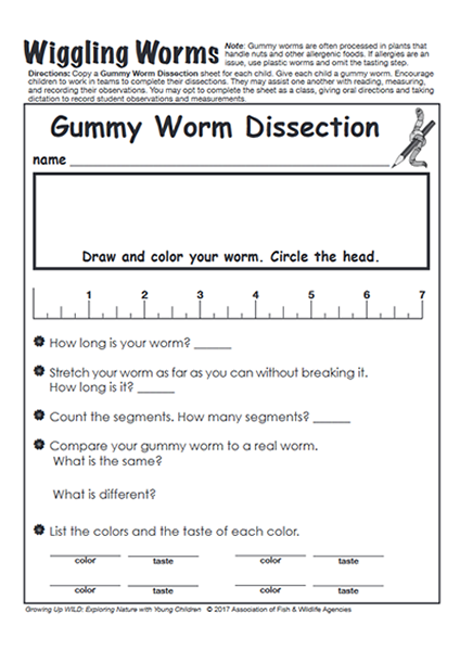 Growing Up WILD Gummy Worm Dissection