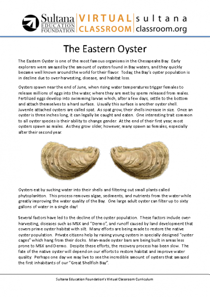 Oyster Text