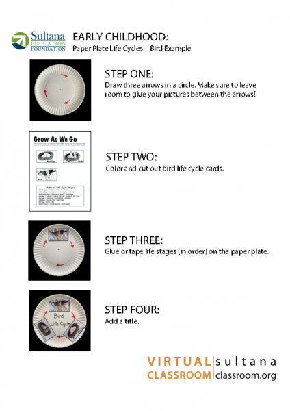 Paper Plate Life Cycle Directions