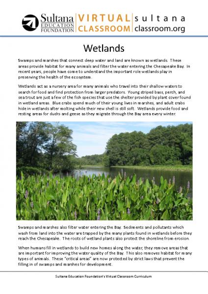 Wetlands Text