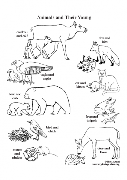baby_animal_coloring