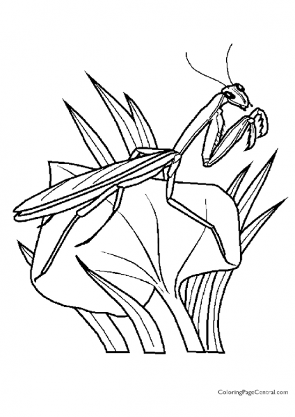 Praying Mantis Coloring Page